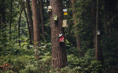 Jednoduché návody na výrobu vtáčej búdky z dreva, plastu či kartónu