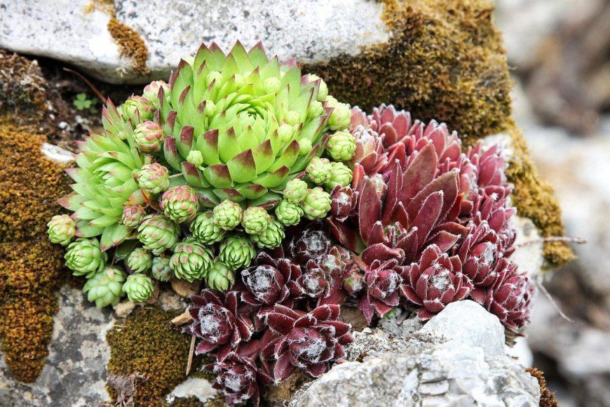 Rastliny do skalky – podľa čoho vyberať?