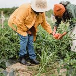 Domáce pestovanie papriky krok po kroku